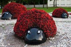 Flower ladybug Stock Images