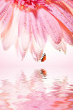 Flower with a ladybug Stock Photos