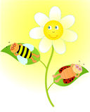 Flower. Ladybug and bee sunbathing on a flower in sunglasses vector illustration