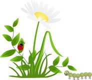 Flower Ladybug Centipede Royalty Free Stock Photo