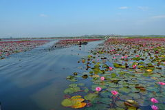 Flower lake,. See if large lotus lake, the picture is only one percent Stock Photo