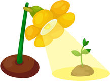 Flower lamp with young green seeding Stock Images