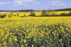 Flower landscape, oilseed rape Royalty Free Stock Photo