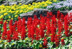 Flower landscaping Stock Photo