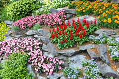 Flower landscaping Royalty Free Stock Images