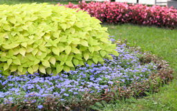 Flower landscaping. Blossoming colorful flowerbeds in summer city park Stock Images