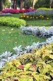 Flower landscaping Stock Image