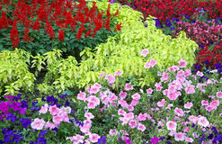 Flower landscaping. Blossoming colorful flowerbeds in summer city park Royalty Free Stock Images
