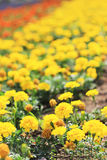 Flower landscaping Royalty Free Stock Photography