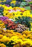 Flower Lane. At Floria Putrajaya, Malaysia Stock Image