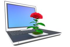 Flower on laptop Stock Photos