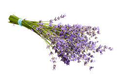 Flower of lavender isolated. Flower of lavender on a white background Royalty Free Stock Image