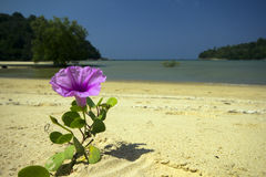 Flower on Layan Beach Stock Image