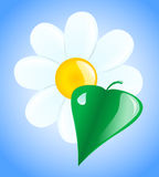 Flower and leaf. White flower and green leaf with dew drops Stock Photography