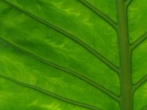 Flower leaf Stock Image
