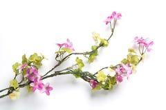 Flower leaf branch Stock Image