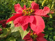 Flower in Leaf categories Stock Images
