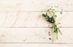 Flower, Leaf, Flora, Wood Royalty Free Stock Photo