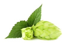 The flower with the leaf hops. Royalty Free Stock Photography