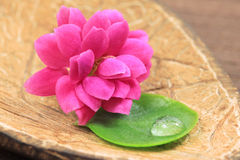 Flower and leaf in spa Stock Photography