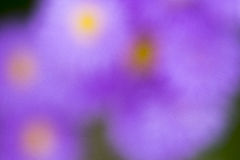 Flower leafs violet close up macro. Flower leafs close up macro stock image