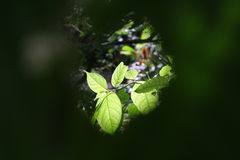 Flower through leave. for background. close up photo. dept of filed. royalty free stock photos