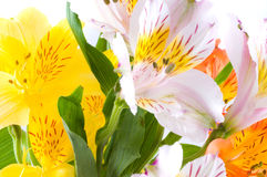 Flower and leaves. Royalty Free Stock Photography