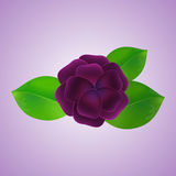The flower and leaves, background. Vector illustration vector illustration