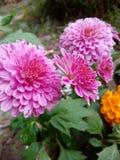 Mallika. Flower≤aves flower nature fllwerplot stock photography