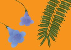 Flower and leaves of a jacaranda. Stock Photography