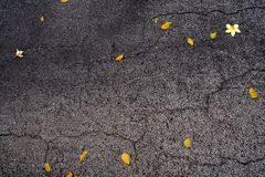 Flower and Leaves on Pavement Stock Photos