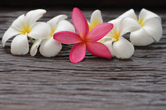 Flower, Leelavadee,Plumeria Stock Photo
