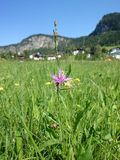 Flower Lens Blur. Lake Thiersee Austria Stock Photos