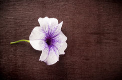 Flower lies on a wooden Board Royalty Free Stock Image