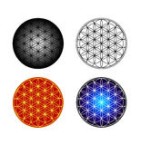 Flower of Life. 4 executions of Flower of Life symbol vector illustration