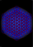 flower of life  Stock Image