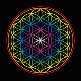 Flower Of Life Bright Glow Colors Black Stock Images