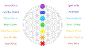 Flower of Life Chakras Description White. The seven main chakras and their meanings, which match perfectly onto the junctions of the Flower-of-Life-Symbol Vector Illustration