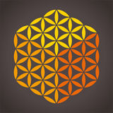 Flower of Life Cube Royalty Free Stock Photo