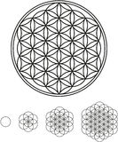 Flower Of Life Development Royalty Free Stock Images