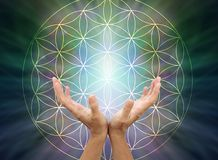 The Flower of Life Mandala. Female cupped hands reaching up  inside the flower of life symbol pattern against a light to dark radiating  background with copy stock photos