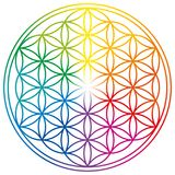 Flower of Life in rainbow colors. Geometrical figure, spiritual symbol, Sacred Geometry. Overlapping circles forming a flower like pattern with symmetrical stock illustration