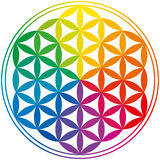 Flower Of Life Rainbow Colors. Flower Of Life with rainbow colors, a geomtrical figure, composed of multiple evenly-spaced, overlapping circles. A decorative