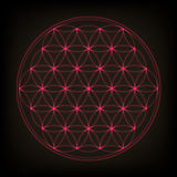 Flower of life. Sacred geometry, vector. Pink neon vector illustration. Royalty Free Stock Photos