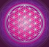 The flower of life Stock Images