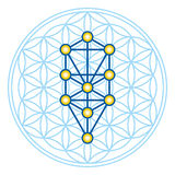 Flower of Life in Tree of Life illustration Stock Images