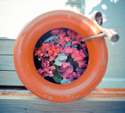 Flower in lifebuoy. Colorful flowers blooming in lifebuoy Stock Photography