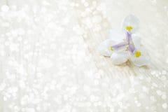 Flower light bokeh Royalty Free Stock Photo