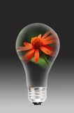 Flower and light bulb Royalty Free Stock Images