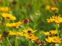 Flower light Royalty Free Stock Image